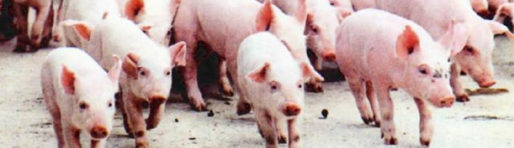 Welfare Issues of Piglet Castration