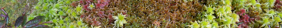 Sphagnum of Vancouver